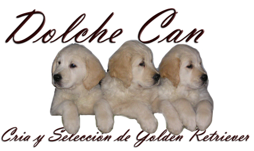 Dolche Can Golden Retriever